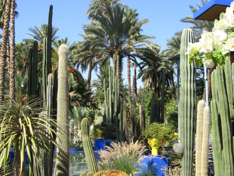 Le Jardin Majorelle : magnifique, avec un petit musée berbère à voir absolument.